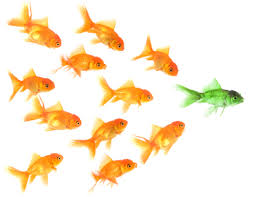 school of goldfish image with green one leading pack of gold